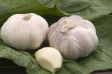 Ajos garlic