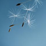i fly away - 22895968