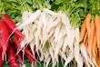 radish carrots