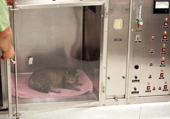 vet technician opens door to oxygen cage