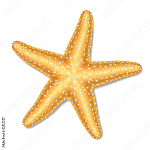 Starfish. Vector illustration. - 22920327