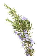 Rosemary herb, Rosmarin
