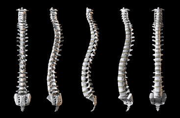 Human Spine pack