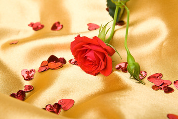 Red roses on golden satin