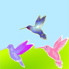 3 Kolibris