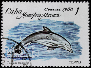 post stamp shows sea mammal dolphin