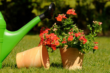 Gießkanne mit Blume und Blumentopf