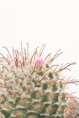 fiore tra le spine