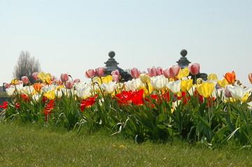 fleurs et fortifications