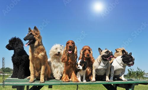 groupe de chiens au soleil