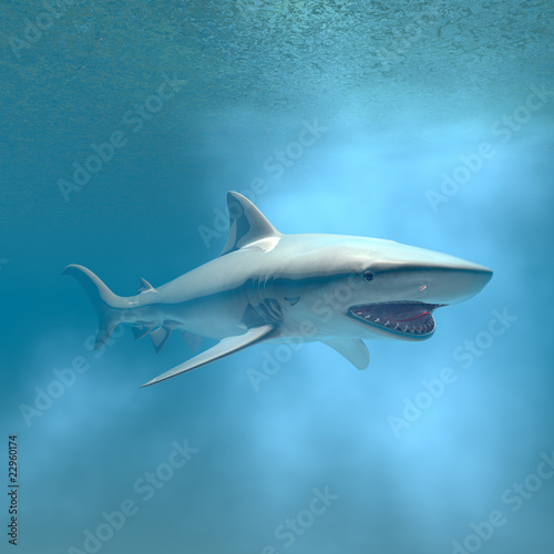tiger shark swimming underwater