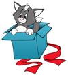 Katze, Kater, Geschenk, Karton, Überraschung