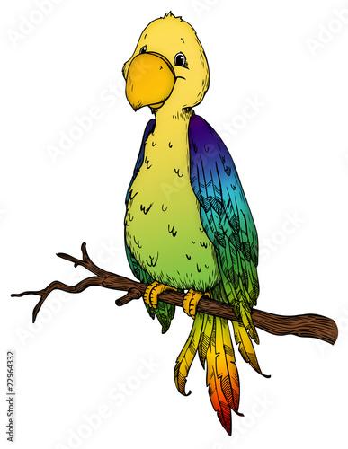 Papagei, Paradiesvogel, Vogel, Kakadu, Tropen, Karibik
