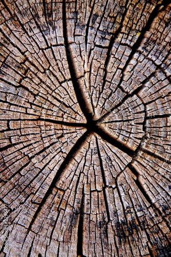 Holz-5225b2