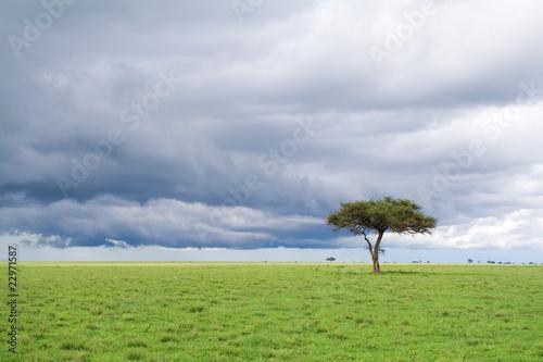 Fototapeten,akazie,afrika,afrikanisch,hintergrund