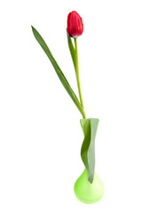 red tulip in green vase over white background