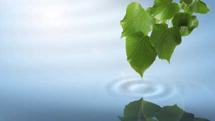 Leaf with soft water ripple and reflection