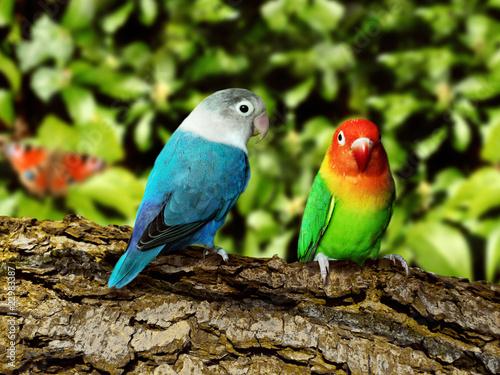 Fototapeten,papagei,vögel,regenwald,urwald