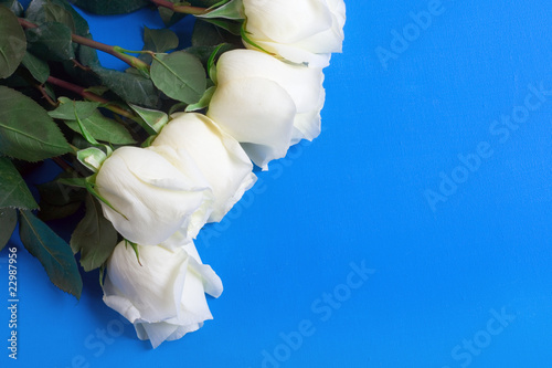white roses over blue background