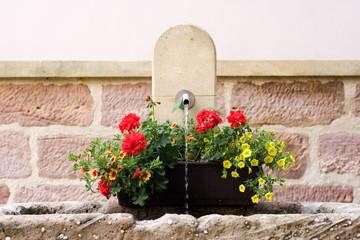 Blumen am Brunnen