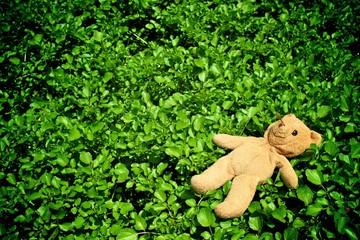 Bear on watercress