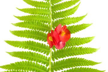Fern leaf and flower