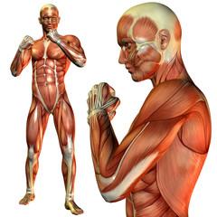 Muskel Mann in Kämpfer Pose