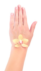 orchid on woman hand isolated