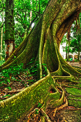 tropical tree in the forest