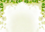 Fototapety Grapevine background