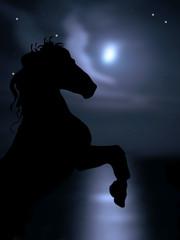 Cavallo sulle zampe su cielo notturno