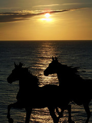 Cavalli al tramonto sul mare