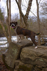 Dog Standing on Rocks