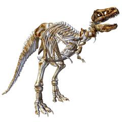 Skelett T-Rex