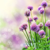 Fototapety Chive flowers