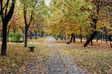 Park alley in autumn, mid October poster
