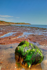 seaweed covered rock on beach in the isle of wight with sea