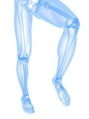 Beinskelett - Anatomie