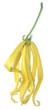 fleur d'ylang-ylang, cananga odorata, fond blanc