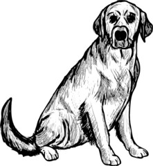 vector - Labrador retriever contour isolated  background