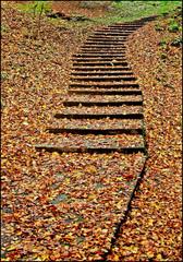 A way to autumn