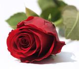 Rote Rose ganz nah - 23110166