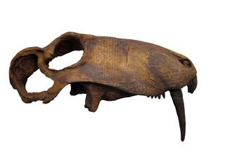 20100530_恐竜の骨格