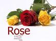 Drei Rosen liegend
