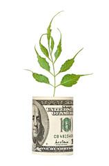 Tree shoot growing from dollar bill