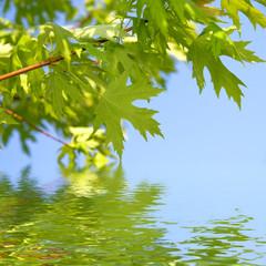 green spring leaves against blue sky