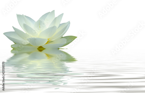 Foto op Aluminium Lotusbloem reflet fleur de lotus