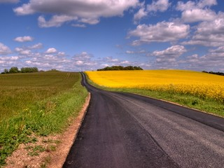 Country road and oil seed, rape fields