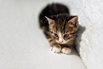 Kätzchen auf Sofa