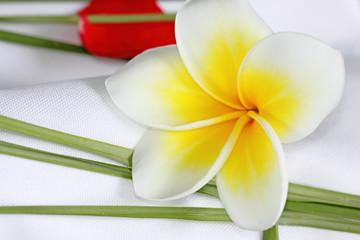 décor de table : serviette blanche, pétales et fleurs